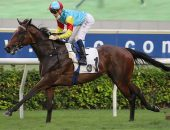 Fantastic Treasure is gunning for a fifth straight win at Sha Tin on Sunday