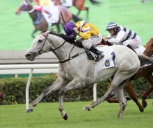 Glorious Dragon will tackle the Champions & Chater Cup on Sunday at Sha Tin